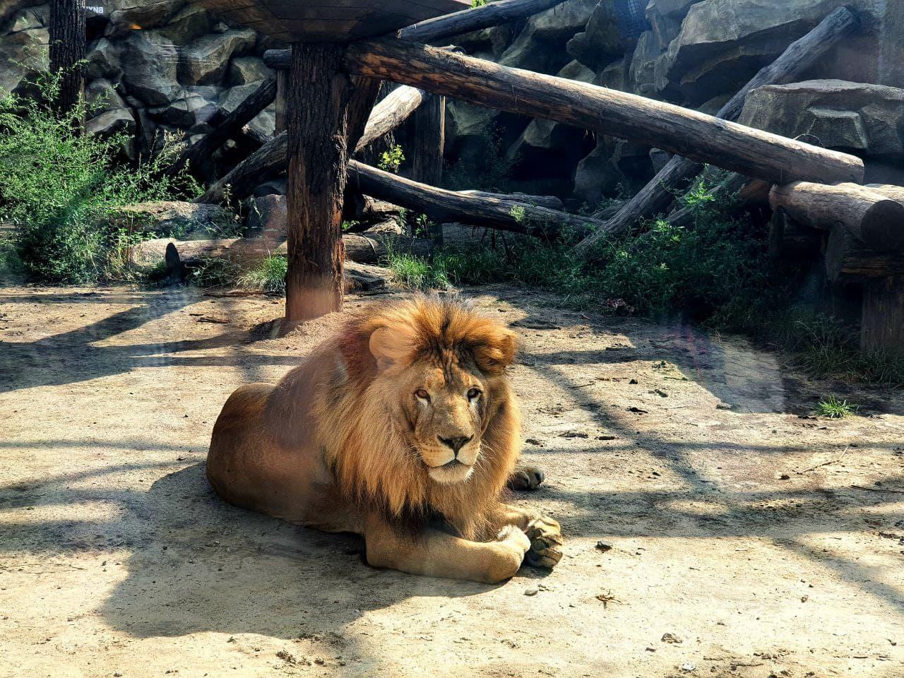 Смотри фото и видео: в Харькове открыли зоопарк после реконструкции фото 4