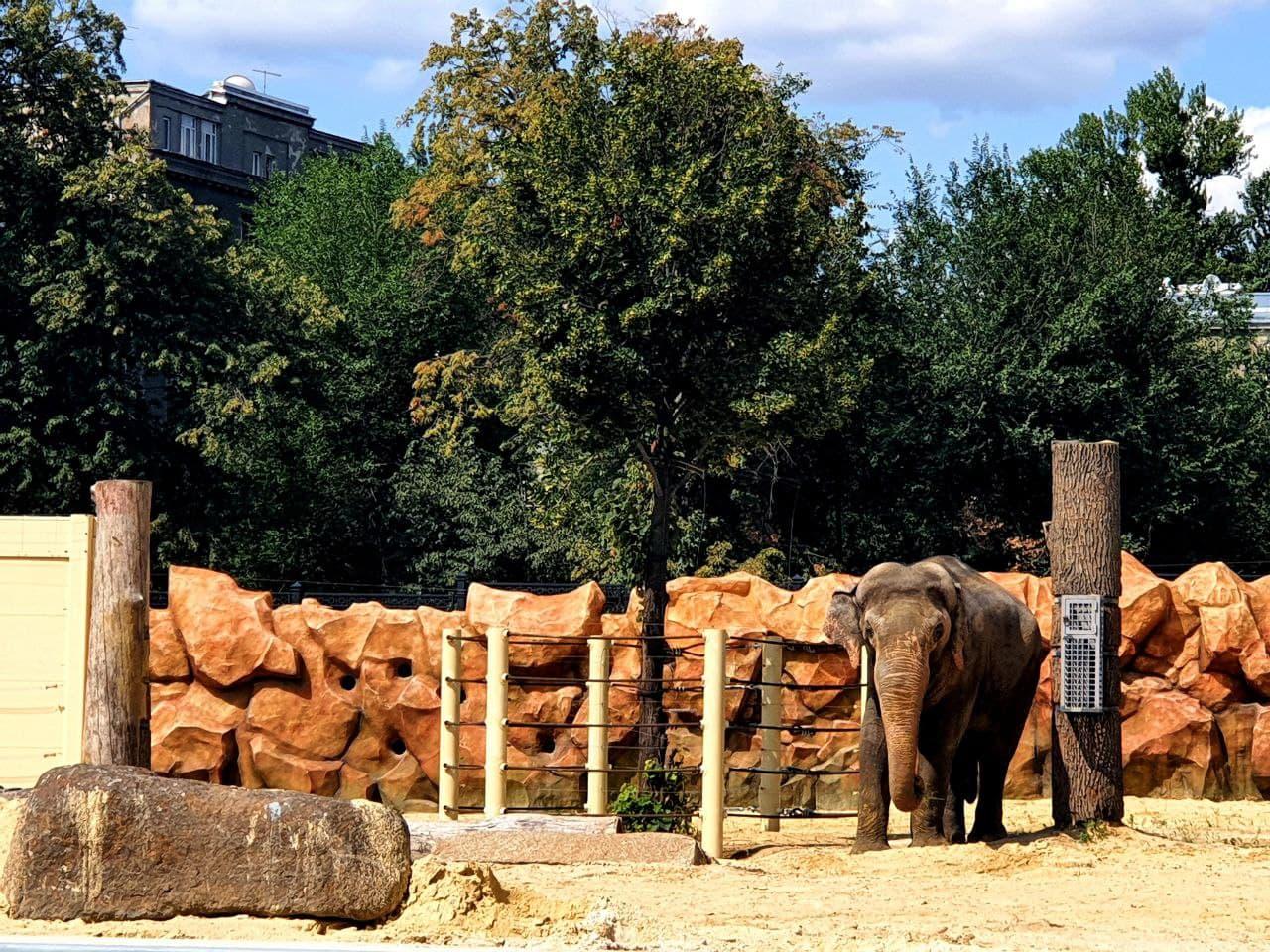 Смотри фото и видео: в Харькове открыли зоопарк после реконструкции фото 6