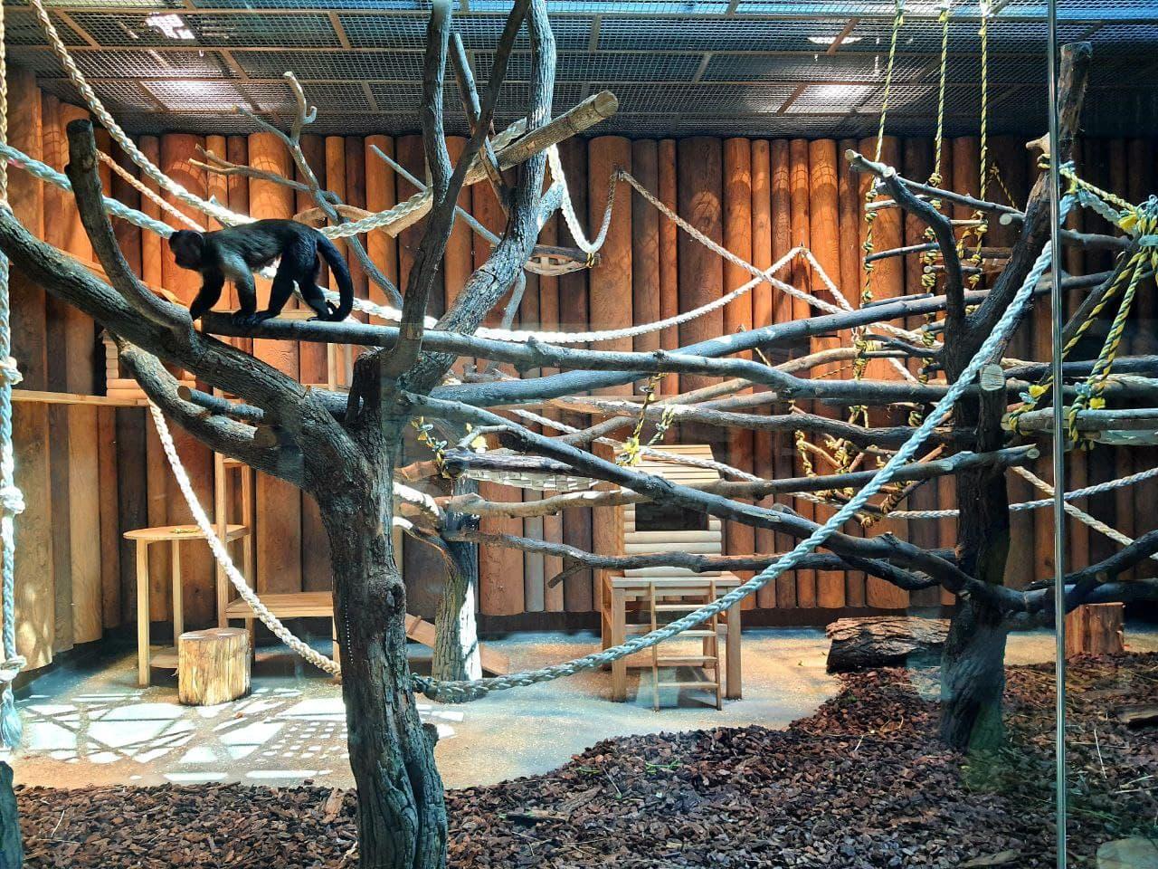 Смотри фото и видео: в Харькове открыли зоопарк после реконструкции фото 7