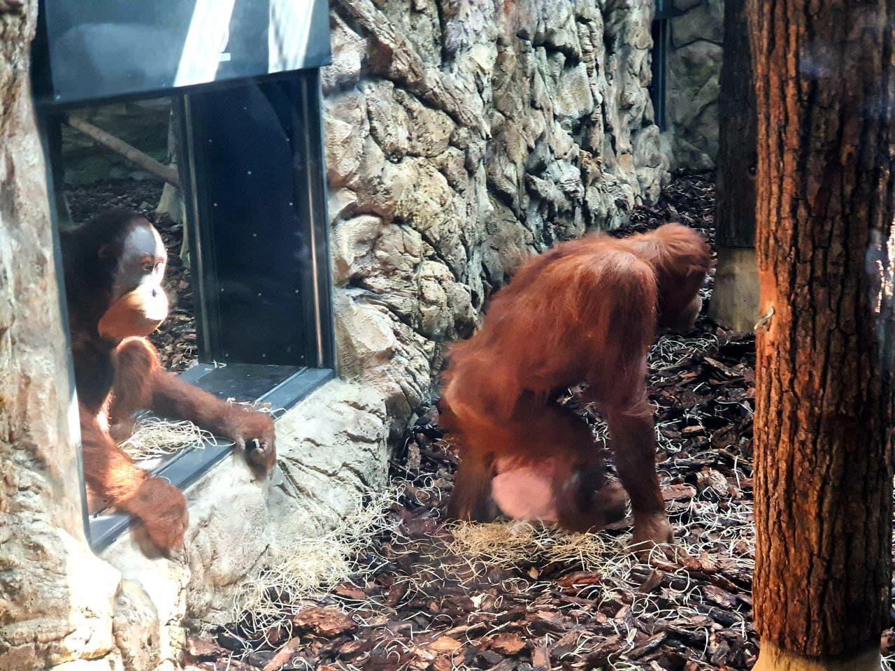 Смотри фото и видео: в Харькове открыли зоопарк после реконструкции фото 8
